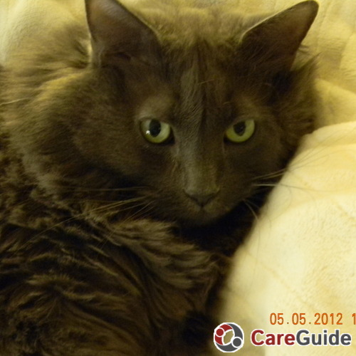 Pet Care Job Debbie Olsen's Profile Picture
