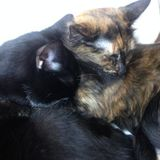 House and pet sitter needed over the Christmas holidays. I have two loving cats who require human attention.
