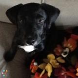 Seeking dog sitter - one night now, possible week in June