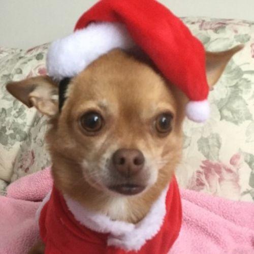 Pet Care Provider Wanda Howe's Profile Picture