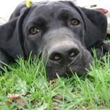 Dog Walker, Pet Sitter in Rockford