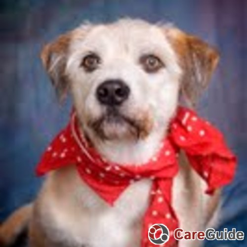 Pet Care Provider Marina  Thorne's Profile Picture