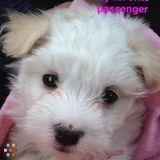 Dog Walker Job, Pet Sitter Job in V'burg