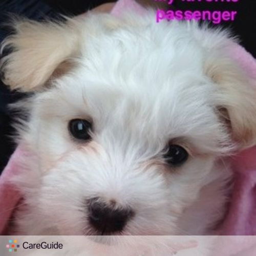 Pet Care Job Odalis Sijin's Profile Picture