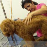 Dog Walker, Pet Sitter in Phoenixville