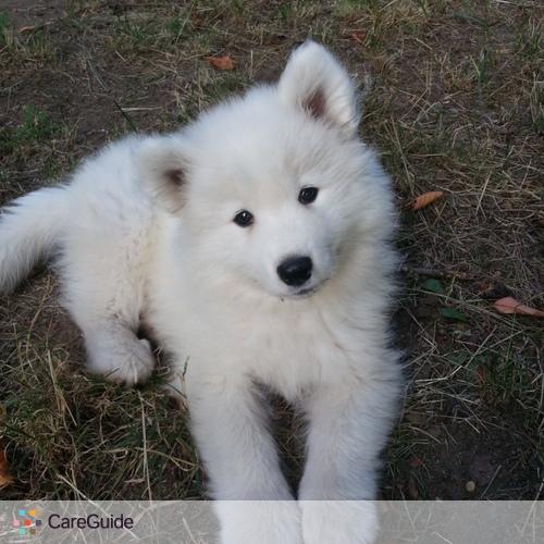 Pet Care Job Jessica C's Profile Picture