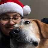 For Hire: Qualified Dog Walker in Bettendorf, Iowa