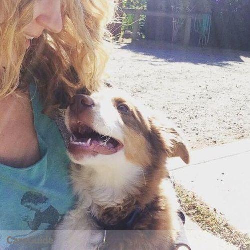 Pet Care Provider Amanda Collins's Profile Picture