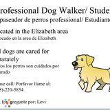 Dog Walker in Elizabeth