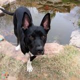 Dog Walker, Pet Sitter in Albuquerque