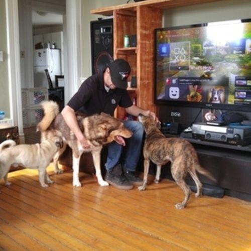 Pet Care Provider Andi Whitehead's Profile Picture