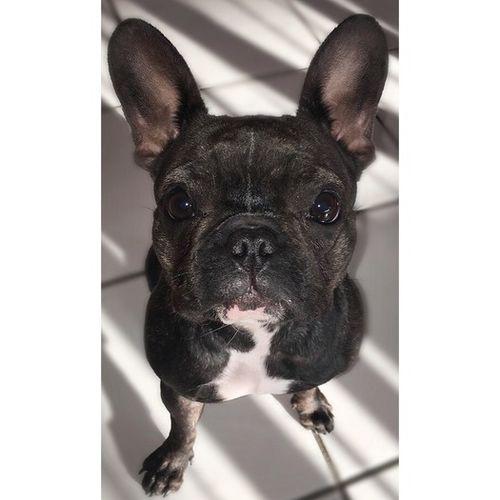 Pet Care Provider Nathalie C's Profile Picture