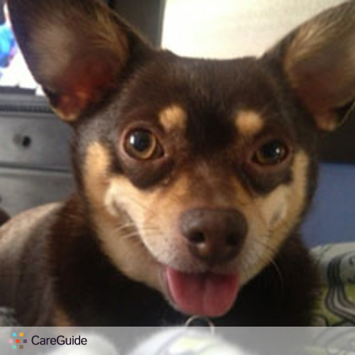 Pet Care Provider Dog Walking South Bay's Profile Picture