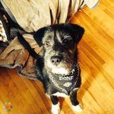 Dog Walker, Pet Sitter in Carleton Place