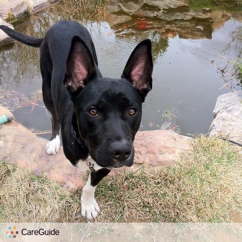 Pet Care Provider Kelley Settle's Profile Picture