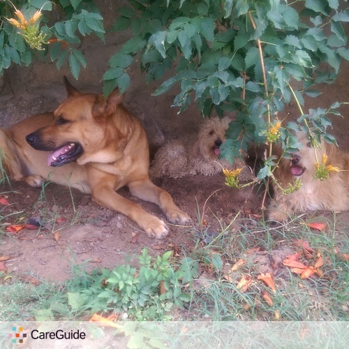 Pet Care Provider Omar L's Profile Picture