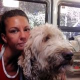 Hire a pet fanatic for drop in visits,transportation to appointments (Vet, training, boarding, grooming etc) tri-county +