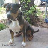 Dog Walker, Pet Sitter in Edmond