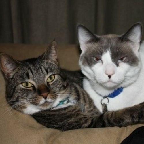 Pet Care Provider Katrina Thompson Gallery Image 1
