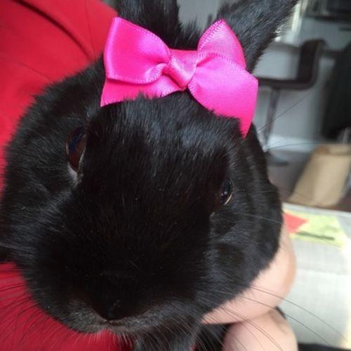 Pet Care Provider Carmen Wong's Profile Picture