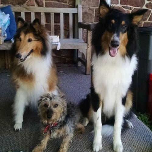 Pet Care Provider Christine K Gallery Image 3