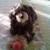 Dawg walker/sitter/lover in Plattsburgh area