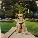 Trustworthy and CPR certify Dog sitter in Encino