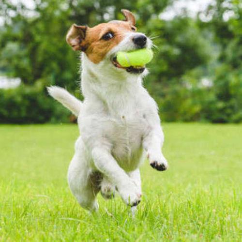 Pet Care Provider Lawrence M's Profile Picture