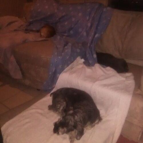 Pet Care Provider Julie V's Profile Picture