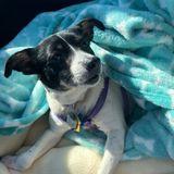 Need Overnight Caregiver for Dog!