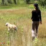 Dog Walker, Pet Sitter in Glens Falls