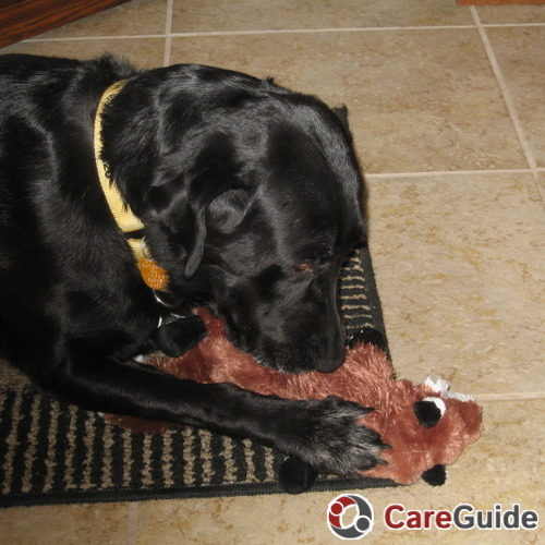 Pet Care Job Steven McCray's Profile Picture