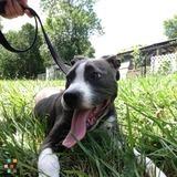 Dog Walker, Pet Sitter in Eatontown