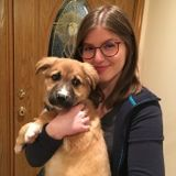 Dog Walking and Pet Sitting Offered in Santa Clara and San Jose Area!