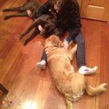 Dog Walker in Madison