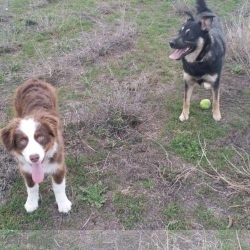 Pet Care Provider Bevin Cook's Profile Picture