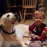 Dog Walker, Pet Sitter in Jackson