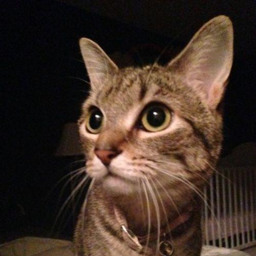 Pet Care Provider Karyn C Gallery Image 3