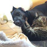 Dog Walker, Pet Sitter in Ephrata