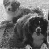 Lincoln, Nebraska Pet Service Provider