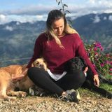 Most Careful Dog Trainer in Bradenton