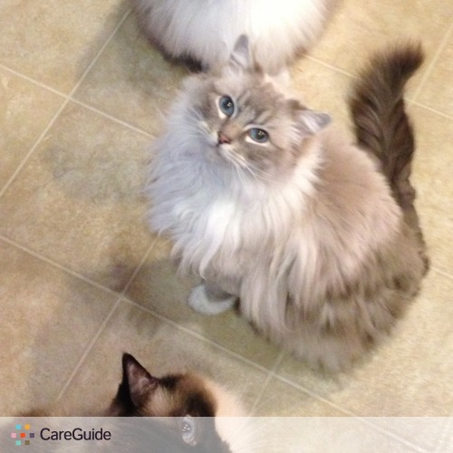 Pet Care Provider Sabrina Svard's Profile Picture