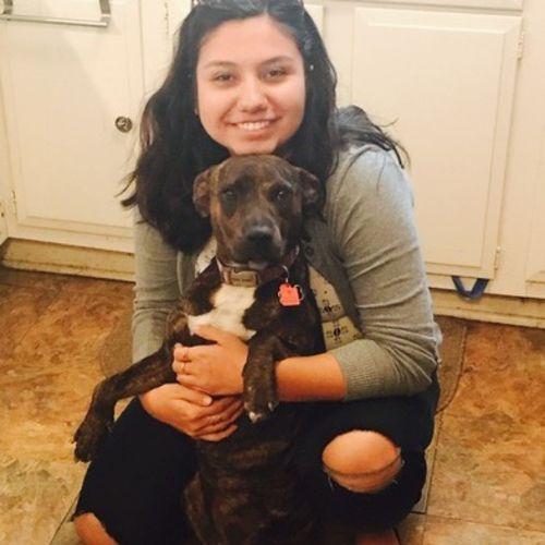 Pet Care Provider Vaida V's Profile Picture