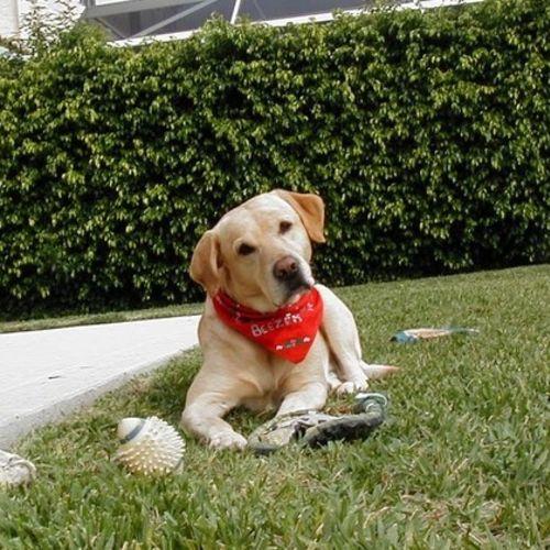 Pet Care Provider Johnny W's Profile Picture