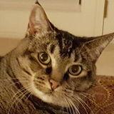 Opportunity: a Great cat Lover in Roseburg