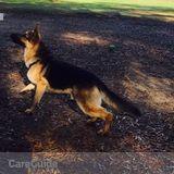 Dog Walker, Pet Sitter in Fort Bragg