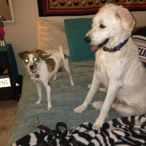 Pet Care Provider Tanya C Gallery Image 1