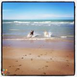 Lakeshore Pet Care - Dog Walking & In-Home Pet Sitting