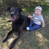 Dog Walker, Pet Sitter, Kennel in Spruce Grove