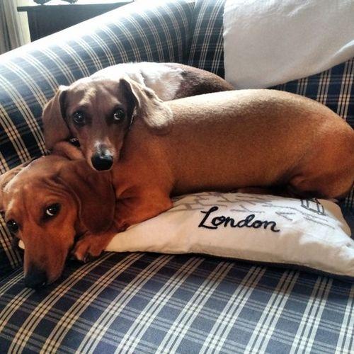 Pet Care Provider Chloe C Gallery Image 2